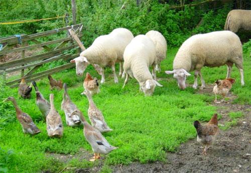 Öko Landwirtschaft